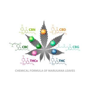 Quelle est la différence entre CBD et THC ?