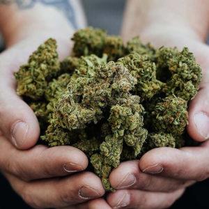 Quelle est la différence entre le chanvre et le cannabis ?
